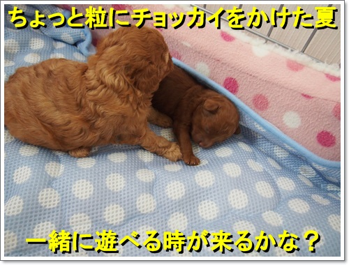 20140901_030.jpg