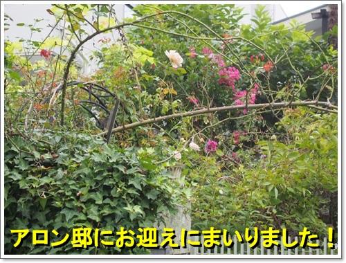 20140920_017.jpg