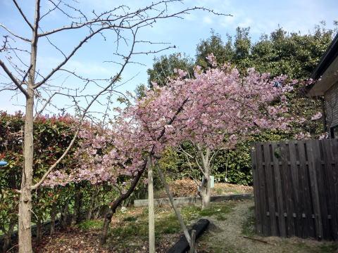 春はもうすぐ(1)