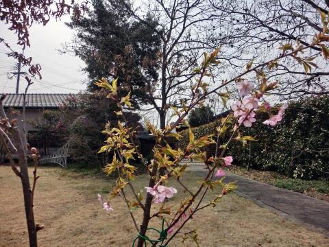 春はもうすぐ(7)