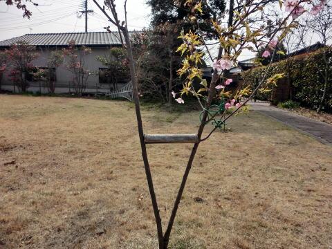 春はもうすぐ(5)