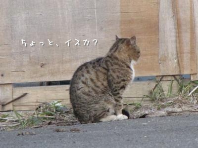 th_IMG_0915.jpg