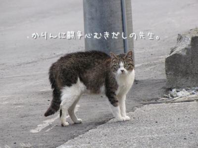 th_IMG_0966.jpg