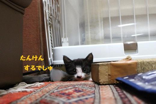 子猫たん②