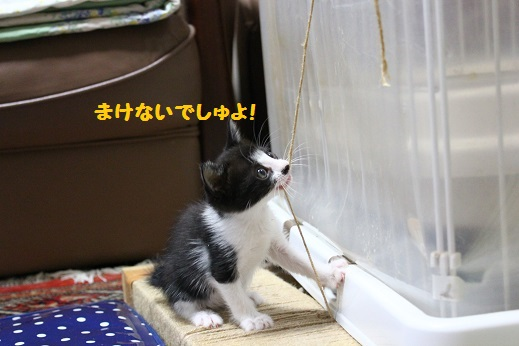 子猫たん③