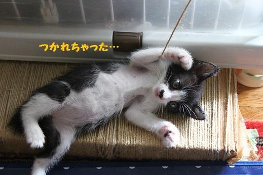 子猫たん④