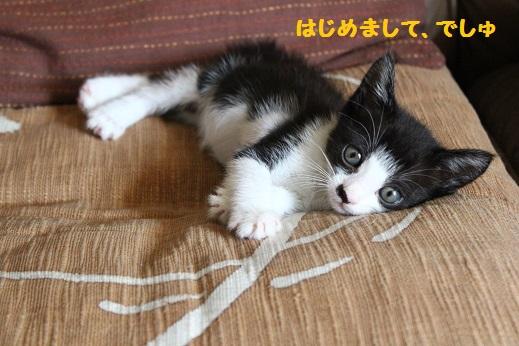子猫たん⑤