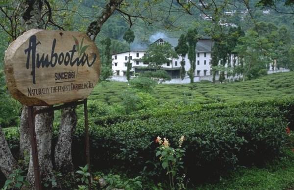 アンボテイア茶園