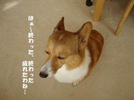 シャンプー後(杏)