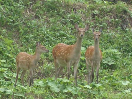 鹿さん3頭
