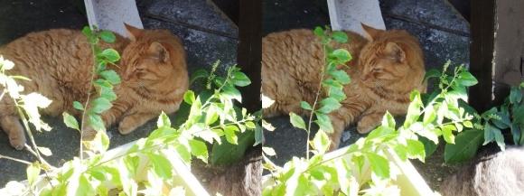 江の島の猫②(平行法)