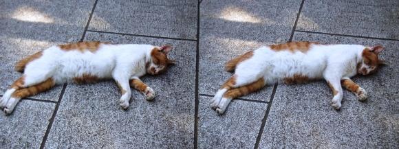 江の島の猫①(交差法)