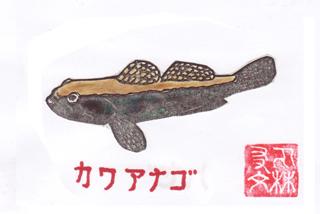 カワアナゴ
