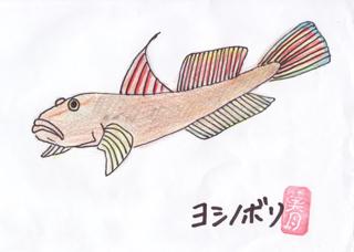 ヨシノボリ