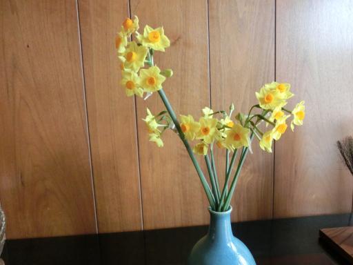 黄色い水仙2