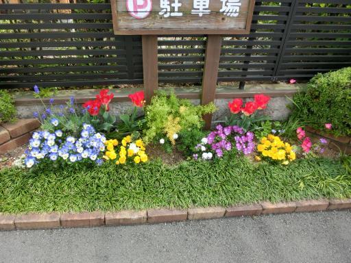 お茶屋さんの花壇2