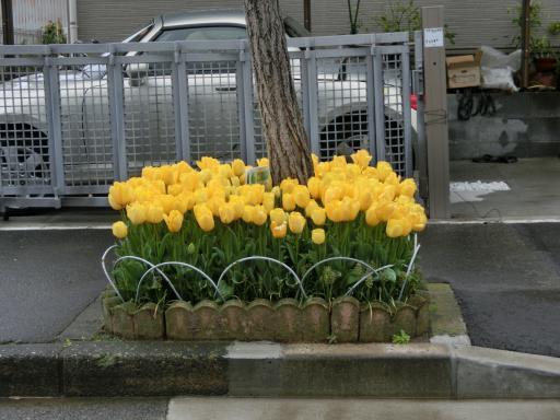 町の花壇1
