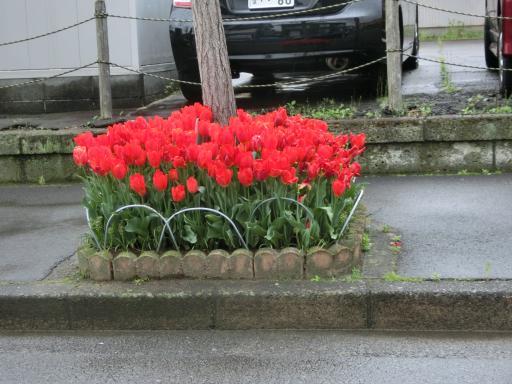 町の花壇2