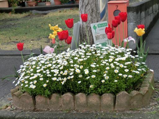 町の花壇3