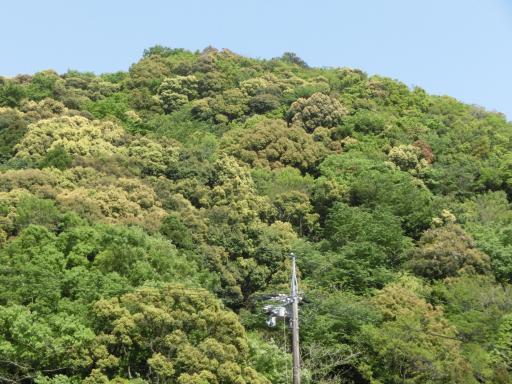 烏帽子山2