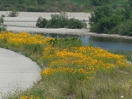 加古川の花