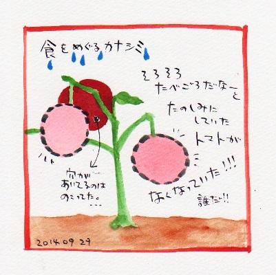 20140929トマトかえせ