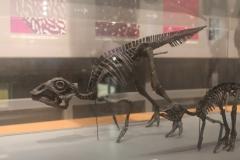 恐竜博物館01