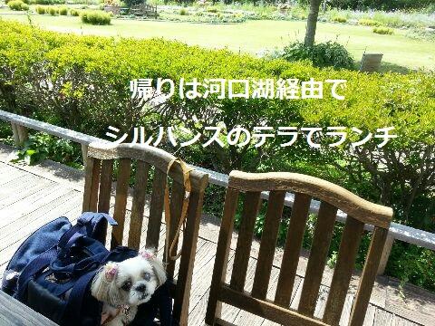20149hakone38ka.jpg