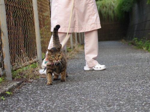 ななちゃん散歩