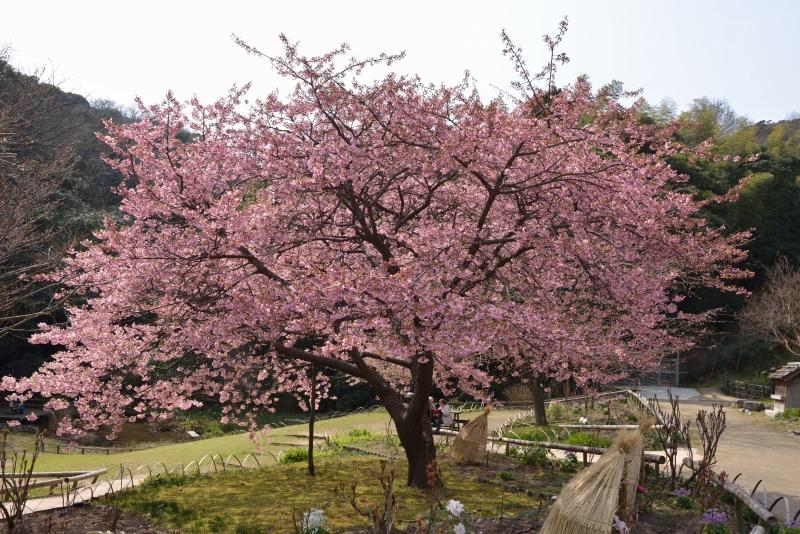 白野江植物公園 (2)