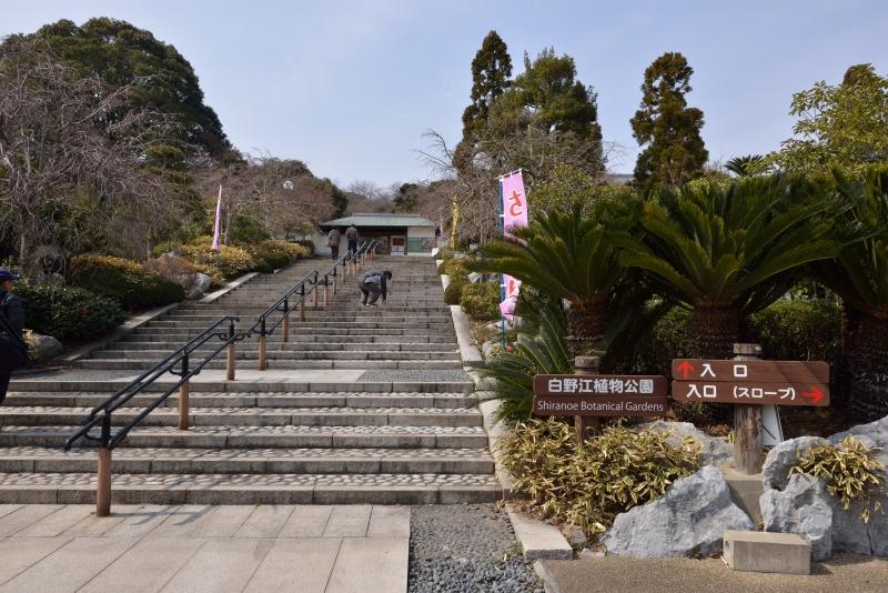 白野江植物公園 (1)