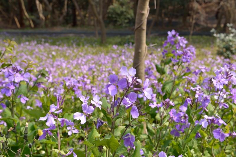 白野江植物公園 (4)