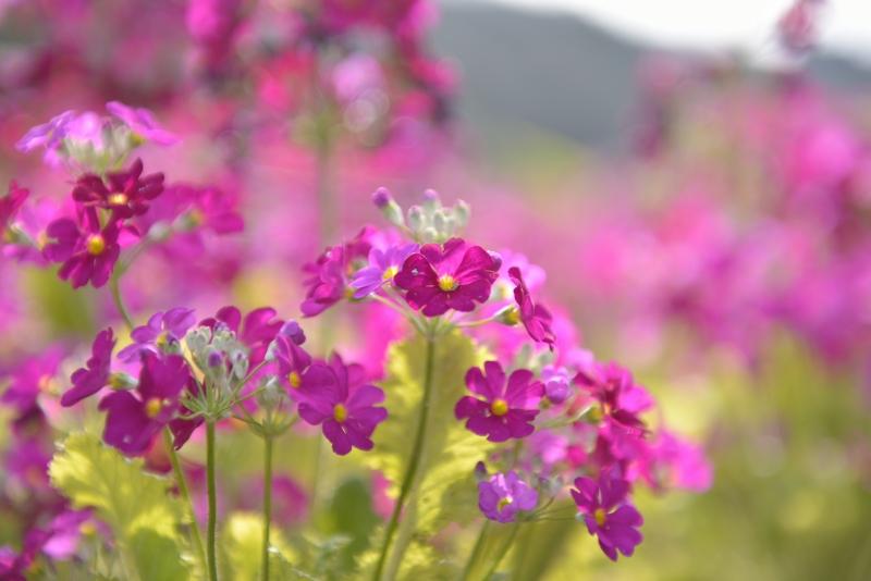 白野江植物公園 (17)
