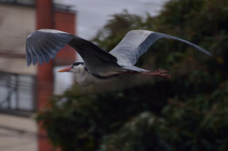 鳥 (3)