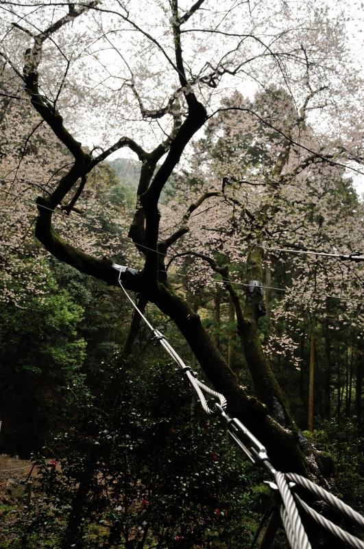 福智山 (5)