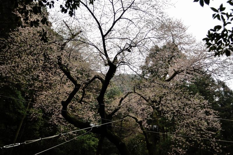 福智山 (4)