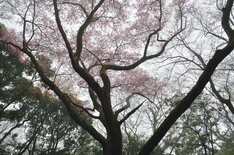 福智山 (9)