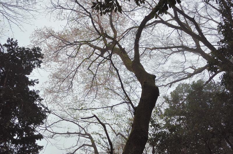 福智山 (8)