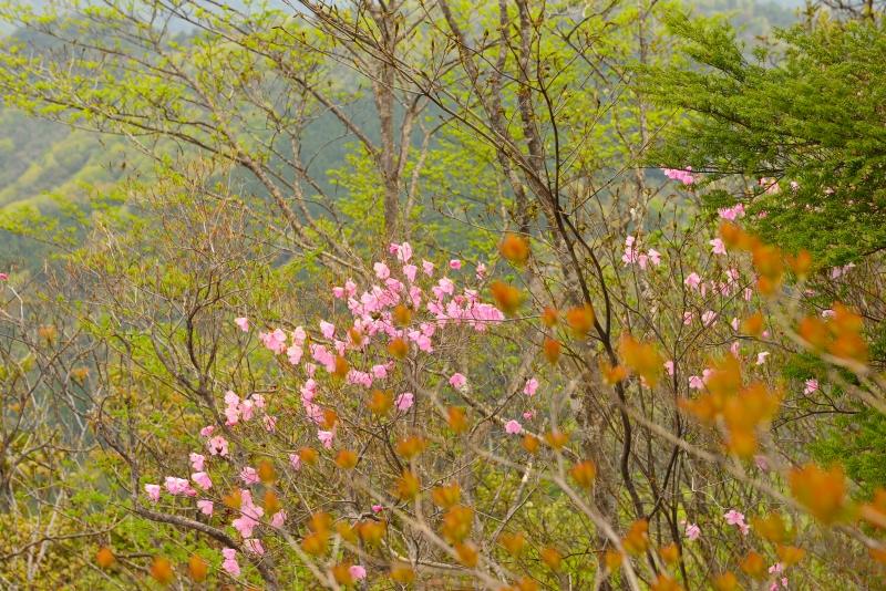 比叡山 (31)