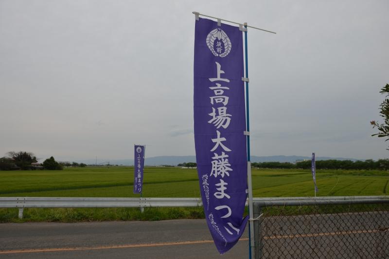 上高場大藤まつり (1)