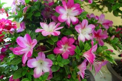 春苑IMG_4862