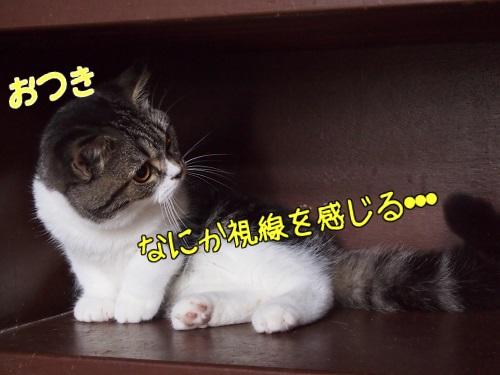 LFz8KyBzrPZqPMd1401120035_1401120226.jpg