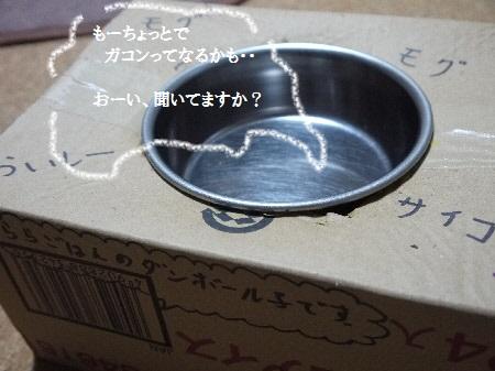 P1260342(1).jpg