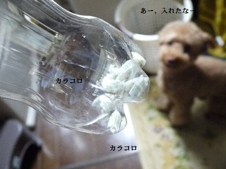 P1280671(1).jpg