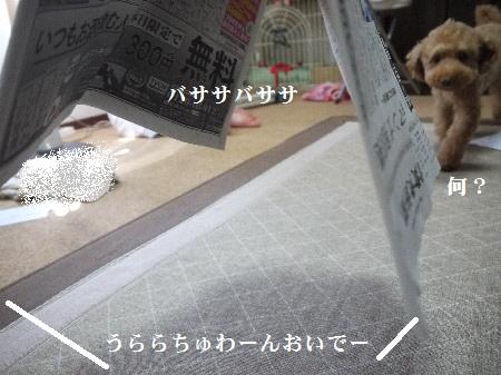 P1290276(1).jpg