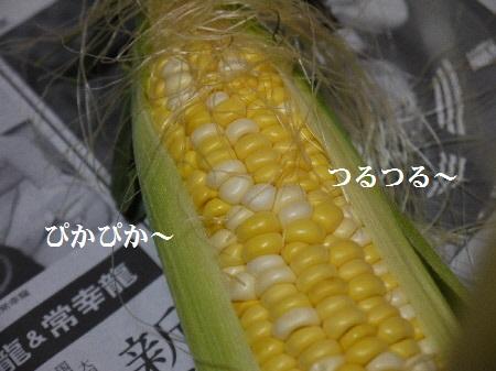 P1310065(1).jpg