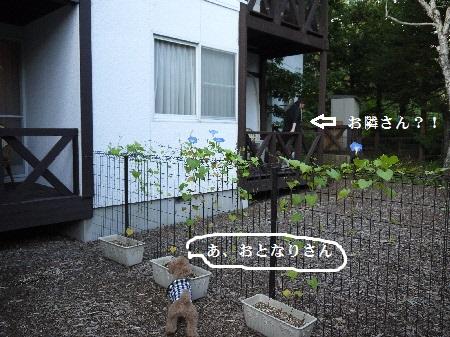 P1310269(1).jpg