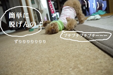P1310707(1).jpg
