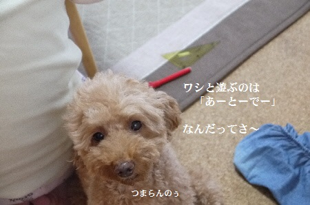 P1310777(1).jpg