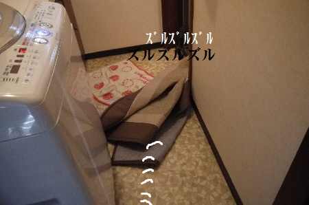 P1310806(1).jpg